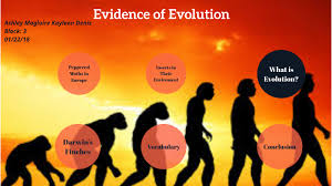 Evidence of Evolution by Ashley magloire