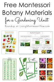 Plant Kingdom Classification Chart For Kids Free Montessori Botany Materials For A Gardening Unit
