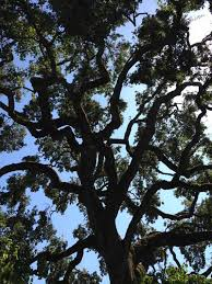 here are some examples of tree work we have done in the past