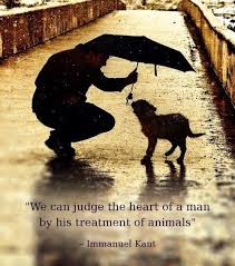 40 Amazing Quotes About Animals And Love Cristina's Ideas Awesome Love Animal Quotes