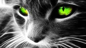 Surprising Hd Hintergrundbilder Animals ...