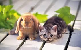 cute cats desktop wallpaper free obtain hd images new