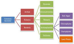 Classification Malus Domestica