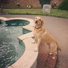 Hundeliebe Labrador Sprüche