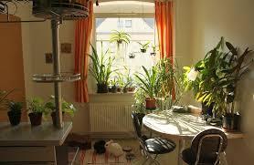 lighting for houseplants. Lighting For Houseplants H
