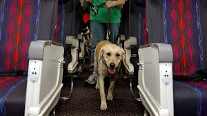 emotional support dogs can fly but only with proper paperwork and other airline imposed