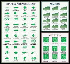 Leaf Classification Charts Leaf Identification Tree Id