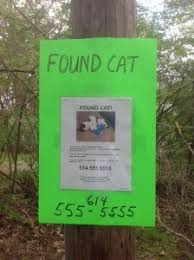 lost and found flyers tips for posting lost and found pet flyers pet fbi