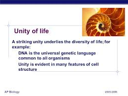 unity in diversity essay unity and diversity essay examples essay for you unity and diversity essay examples image