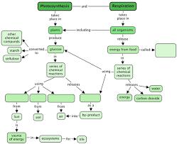 Photosynthesis Chart Worksheet Photosynthesis Photosynthesis And Respiration Siyavula
