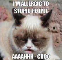 Grumpy Cat: Lemonade & Stupid People #GrumpyCat #Memes | Grumpy ... via Relatably.com