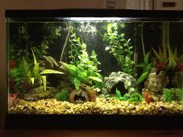 Mario Brothers Aquarium Decorations 56 Best Images About Aquarium Decor Ideas On Pinterest
