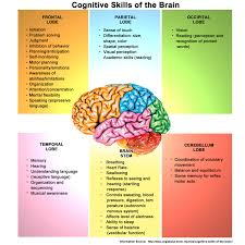 Piaget S Stages Of Cognitive Development Chart Pdf Brain Cognitive Development Term Paper Example