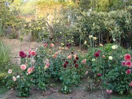 Kitchen Gardens In India Entertaining From An Ethnic Indian Kitchen Alluring Dahlias