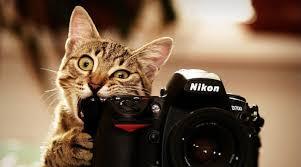 Фотограф, отзовись! В Черноморске стартовал фотоконкурс   Новости