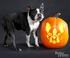 pumpkin carving stencils dog. for more information on how you can download these free pumpkin carving stencils at better homes and gardens click here. dog
