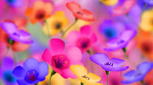 Wallpapers HD Flower Group (91+)