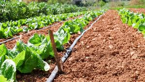 setting up a drip irrigation system