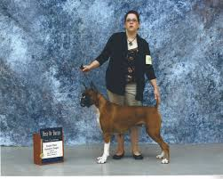 quality boxers tight to the breed standard so both the united states and europe can be proud of all of our puppies e with a health guarantee