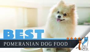 Simply Nourish Large Breed Puppy Food Feeding Chart 15 Best Dog Foods For Pomeranians Our 2019 In Depth Feeding