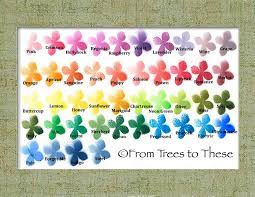 Calla Lily Color Chart Calla Lily Bouquet Set 12 Stems