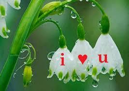 beautiful love flower hd wallpaper scoopak