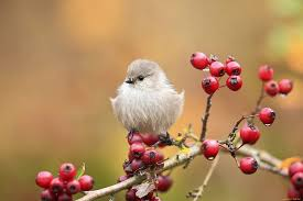 hd wallpaper cute bird on branch