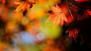 لكل محبي صور الطبيعة  اكبر تجميع لصور الطبيعة - صفحة 3 Images?q=tbn:ANd9GcQVROlLZXZItHpA6uE95F1_lOh2ZacGxDUOGlHx79CpYo9MEXczHw