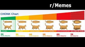 Chonk Chart For Cats R Memes Chonk Charts