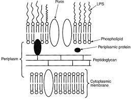باکتری شناسی عمومی