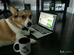 dog tech support. stuff the tech support corgi says dog
