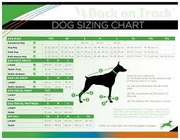 Dog Sizing Guide