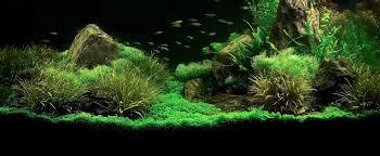 Mediterraneo passione acquari