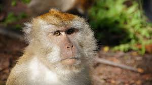 aggressive monkey es dog away buzz videos your viral videos
