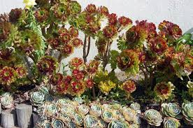 Small Picture Best Of Succulent Garden Design Plans 1024680