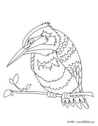 Common Kingfisher Coloring Page Nice Bird Coloring Sheet More