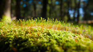 cool hd desktop backgrounds 1920x1080. Perfect 1920x1080 Cool Hd Wallpapers 1920x1080 Close Up Macro Moss For Cool Hd Desktop Backgrounds