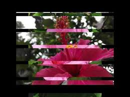 Assamese Flower Chart