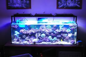 reliability and attractive design may suit your willingness to led aquarium lighting