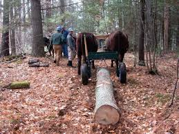 Logging With Oxen In New Hampshire Small Farmers Journal