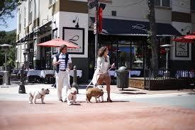 we provide pure breed french bulldog and english bulldog puppies for