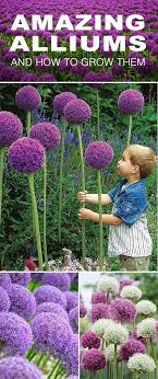 Small Picture Best 25 Gardens ideas only on Pinterest Garden ideas Backyard
