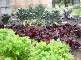 Ornamental Kitchen Garden Maintaining A Vegetable Garden Hgtv