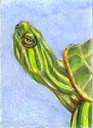 Small Picture turtle See Draw Share