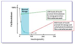 Insulin Range Chart Glossary