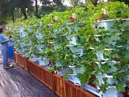 Vertical Kitchen Garden Ezgro Garden Hydroponic Vertical Container Garden Kits