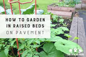 garden in raised beds on pavement