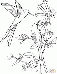 Small Picture Coloring Pages Hummingbird Coloring Pages Hummingbird Coloring