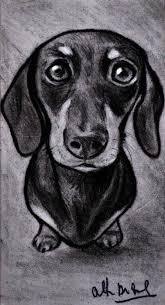 Schizzo Disegno Ritratto Cane Bassotto Matita Su Cartoncino 19x105
