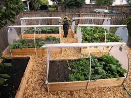 Kitchen Gardening For Beginners Vegetable Gardening For Beginners